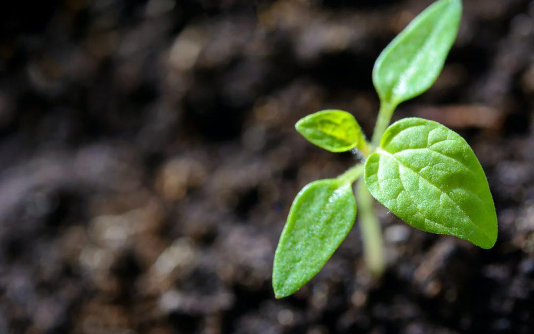 Le besoin de grandir
